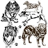 Collection of dogs. Vector collection of different dogs on white Royalty Free Stock Image