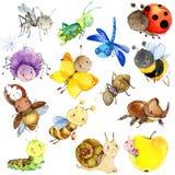 Collection drôle d'insectes Insecte de bande dessinée d'aquarelle Image libre de droits