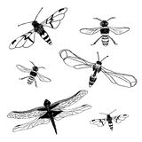Collection of dragonfly and bee. Vector illustration/ EPS 8. Collection of dragonfly and bee isolated on white background. Set design elements. Vector vector illustration