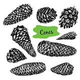 Collection of drawn fir cones. Set of christmas hand drawn graphic fir cones Royalty Free Stock Photography
