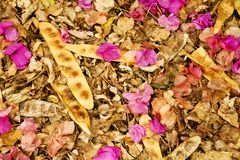 Collection of dried leaves and blooms Royalty Free Stock Image
