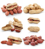 Collection of dried peanut fruits isolated Royalty Free Stock Photos