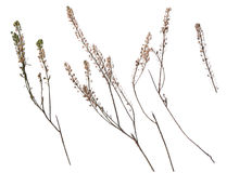 Collection of dried plants isolated on a white background royalty free stock images