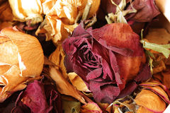 Collection of dried roses gift husband Royalty Free Stock Photos