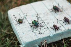 Collection of dry beetles on white foam Stock Photo