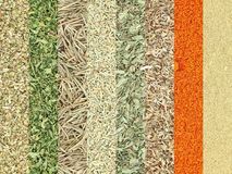 Collection of dry herbs spices Royalty Free Stock Photos