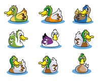 Collection of Duck  Vector Royalty Free Stock Photos