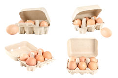 Collection of eggs in cardboard tray isolated on white. Royalty Free Stock Images