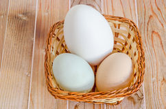 Collection of eggs, large white goose egg, light green duck egg, light brown chicken egg, brown basket with grass, wood stock photos