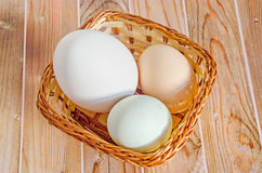 Collection of eggs, large white goose egg, light green duck egg, light brown chicken egg, brown basket with grass, wood stock image
