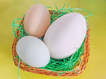 Collection of eggs, large white goose egg, light green duck egg, light brown chicken egg, brown basket with grass, yellow royalty free stock photos