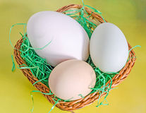 Collection of eggs, large white goose egg, light green duck egg, light brown chicken egg, brown basket with grass, yellow stock photos