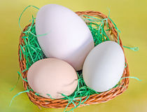 Collection of eggs, large white goose egg, light green duck egg, light brown chicken egg, brown basket with grass, yellow stock images