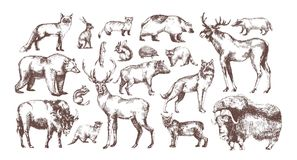 Collection of elegant drawings of European forest animals isolated on white background. Bundle of herbivorous and. Carnivorous mammals hand drawn in vintage Stock Photography