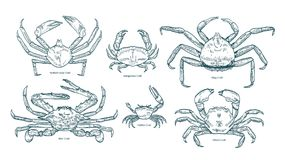 Collection of elegant drawings of various types of crabs. Bundle of beautiful marine animals or crustaceans hand drawn. On white background. Monochrome vector stock illustration