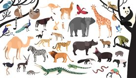 Collection of exotic animals and birds living in savannah and tropical forest vector illustration