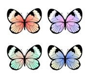 Collection of exotic colorful butterflies, vector illustration.  vector illustration