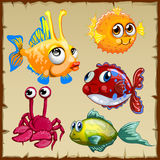 Collection of exotic fish and crab, 5 icons Royalty Free Stock Photography