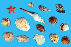 Collection of exotic sea shells and starfish on a blue background. Top view Royalty Free Stock Photo