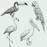 Collection of exotic tropical birds Stock Images