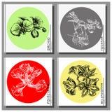 Collection exotique de fleurs : Cartes en liasse de Poinciana, de belladone, de fuchsia et d'orchidée, représentées dans le style Photo stock