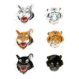 Collection face tiger Royalty Free Stock Photos