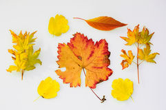 Collection of fall leaves Stock Images