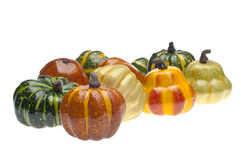 Collection of Fall Pumpkins and Gourds Stock Images