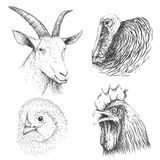 Collection of farm animals face. Turkey, chicken, cock and goat.Design for advertising of agricultural products.Vector hand drawn illustration Royalty Free Stock Photo