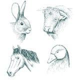 Collection of farm animals Royalty Free Stock Photos