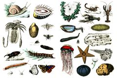 Collection of fauna on a white background. Stock Image