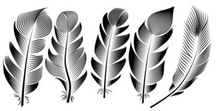 Collection of feather illustration, drawing, engraving, ink, line art stock illustration