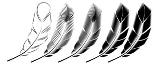 Collection of feather illustration, drawing, engraving, ink, line art royalty free illustration