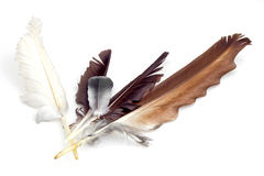 Collection of feathers Royalty Free Stock Photography