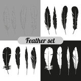 The collection of feathers Royalty Free Stock Image