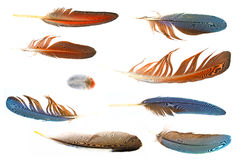 Collection of feathers Stock Photos