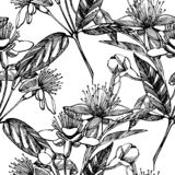 Collection of feijoa fruit, flower, leaves and feijoa slice. Graphic hand drawn illustration. Collection of feijoa fruit, flower, leaves and feijoa slice stock photography