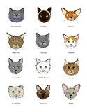 Collection feline muzzles kittens Royalty Free Stock Photo