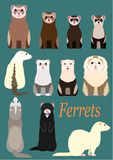 Collection of ferrets. With various sizes, colors and patterns stock illustration