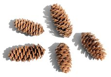 Collection of fir cones with cast shadow