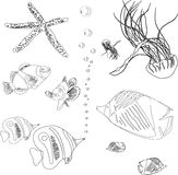 Collection of fish from red sea. jellyfish, starfish. coloring book Royalty Free Stock Photography