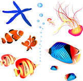 Collection of fish from red sea. jellyfish, starfish. No mesh no blend. collection Stock Photo