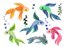 Collection Fish Watercolor  on a White Background. For your Design Royalty Free Stock Photo
