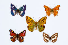Collection of five brush footed butterflies on white Stock Photography