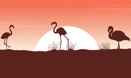 Collection flamingo landscape silhouettes at sunset Stock Image