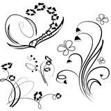 Collection of floral design element Stock Photos