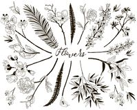 Big Collection of Floral Design Elements. Collection of Floral Design Elements. Hand Drawn Branches and Flowers. Decorative Vector Illustration. Lily Flower Royalty Free Stock Photo