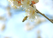 Collection of floral pollen Stock Photography