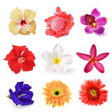 Collection of flower Royalty Free Stock Photo