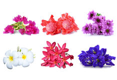 Collection of flower Stock Image